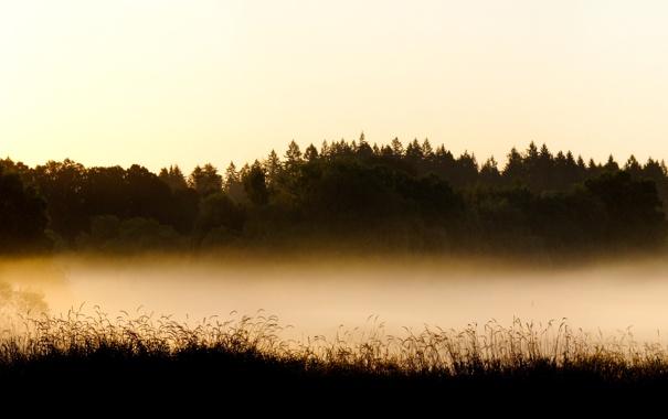 Фото обои лес, деревья, туман, фото, пейзажи, дымка