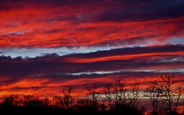 Фото обои небо, облака, деревья, силуэт, зарево