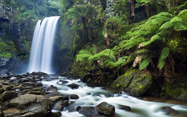 Фото обои лес, деревья, природа, река, камни, водопад, джунгли
