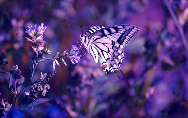 Фото обои цветы, бабочка, насекомое, боке