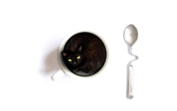 Фото обои кошка, белый, фон, чашка, ложечка, содержимое