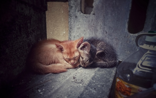 Фото обои кошки, дом, фон