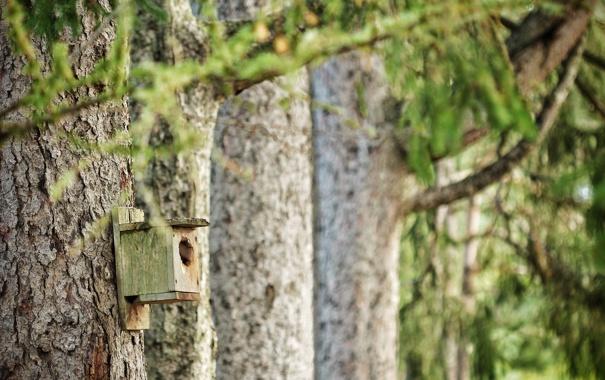 Фото обои деревья, природа, домик