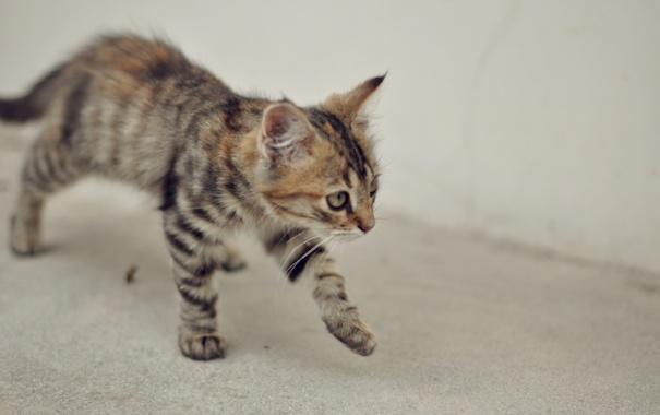 Фото обои животные, кот, оранжевый, серый, животное, обои, киса