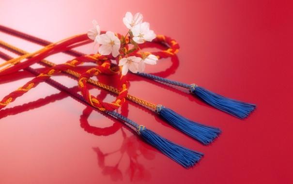 Фото обои цветок, веревка, Япония, шнур, тесьма