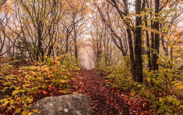 Фото обои осень, лес, туман, камень, тропинка