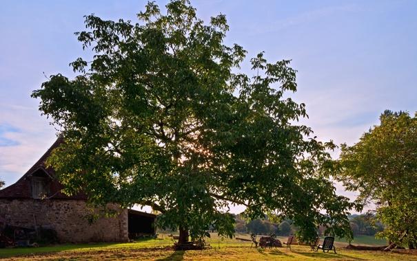 Фото обои листья, лучи, свет, деревья, скамейка, природа, дом