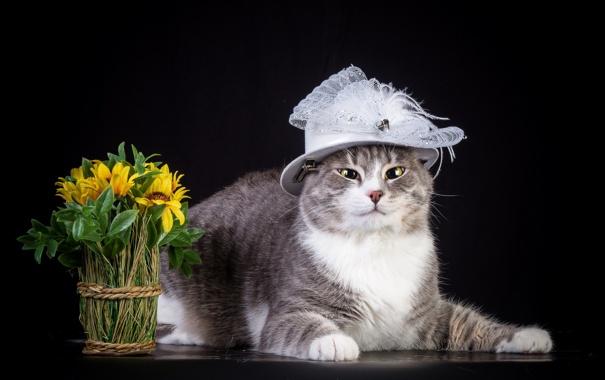 Фото обои кошка, цветы, шляпка