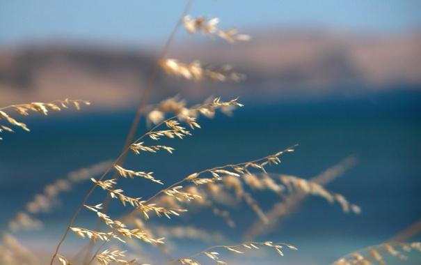 Фото обои море, трава, макро, синий, природа, фон, ветер