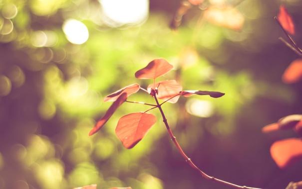 Фото обои листья, цвета, природа, обои, яркие, ветка, размытость