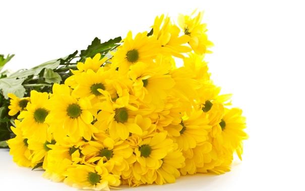 Фото обои цветы, букет, желтые, хризантемы