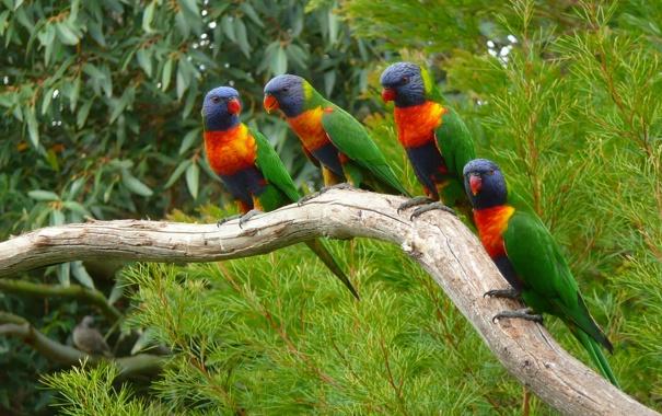 Фото обои лес, краски, ветка, перья, попугай