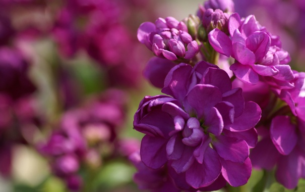 Фото обои зелень, листья, цветы, растение, лепестки, яркость, соцветия