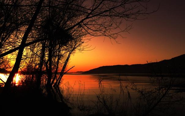 Фото обои небо, деревья, закат, озеро, силуэт