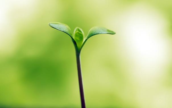 Фото обои зелень, листок, hope