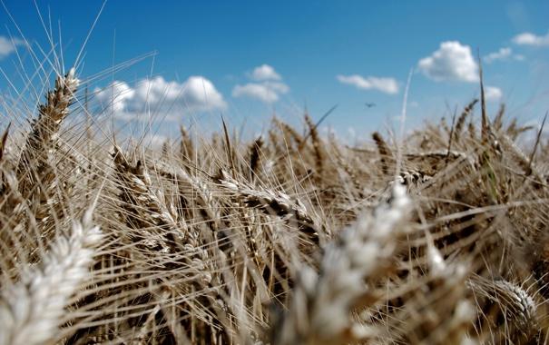 Фото обои поле, лето, небо, солнце, макро, природа, фото