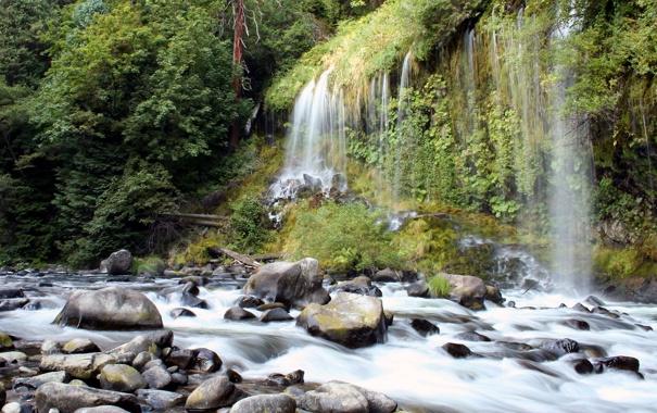 Фото обои лес, поток, водопадик