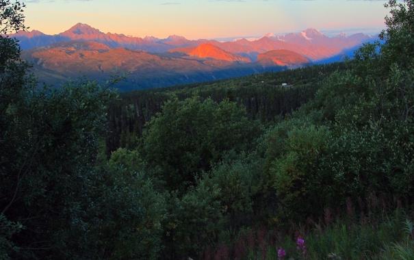 Фото обои лес, закат, горы