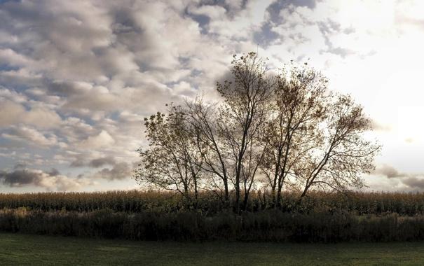 Фото обои небо, трава, деревья