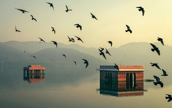Фото обои вода, свет, птицы, дома, утро, Индия, Джайпур