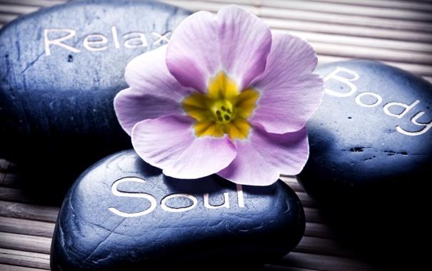 Фото обои цветок, надпись, Spa, спа, спа камни, Spa stones, the label