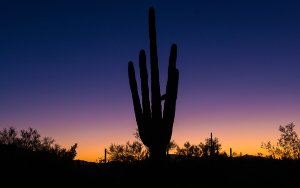 Фото обои пустыня, кактус, горизонт, силуэт, Аризона, зарево, США