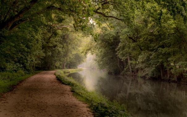 Фото обои дорога, осень, листья, солнце, деревья, река