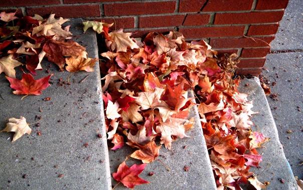 Фото обои листья, кирпич, красные, ступени, опавшие, осенние