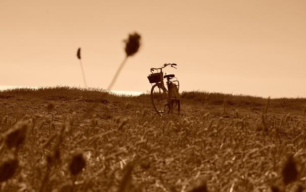 Фото обои поле, велосипед, фон