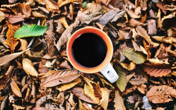Фото обои осень, листья, кружка, чашка, напиток