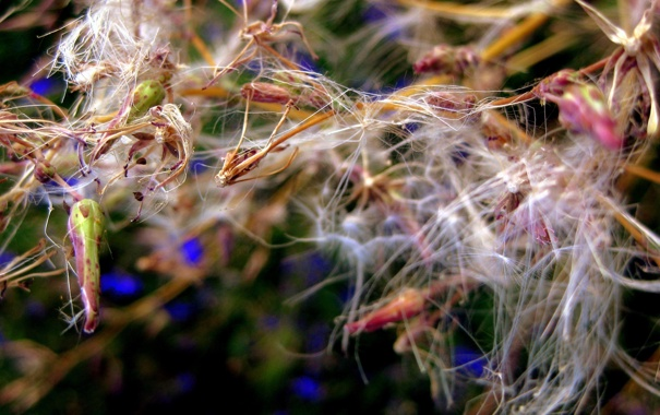 Фото обои паутина, макро, цветы