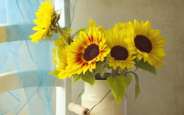 Фото обои цветы, подсолнух, бидон