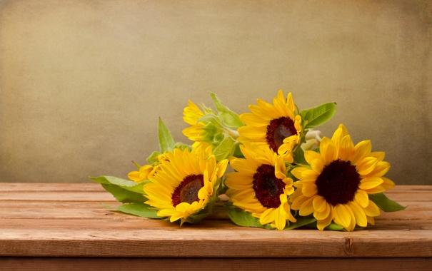 Фото обои цветы, листва, подсолнух
