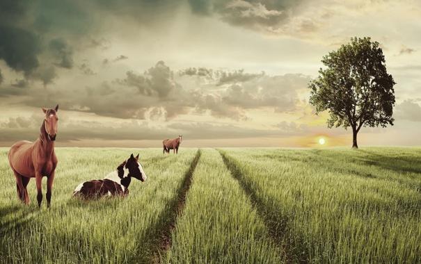 Фото обои поле, животные, дерево, лошадки