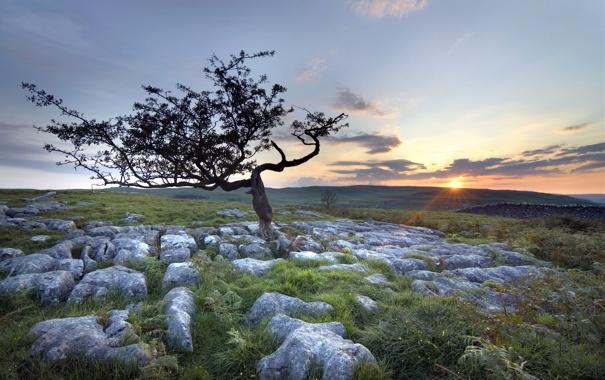 Фото обои поле, пейзаж, закат, камни, дерево