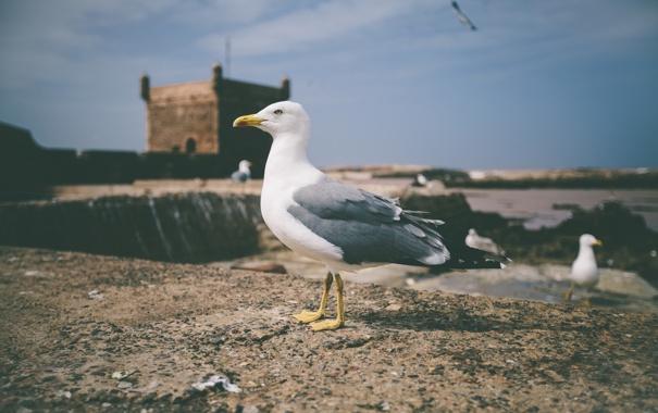Фото обои пляж, небо, полет, замок, чайки, чайка