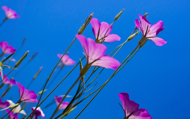 Фото обои бутоны, синий, вверх, небо, весна, ростки, цветы