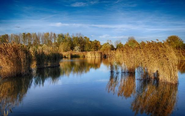 Фото обои деревья, отражение, трава, озеро