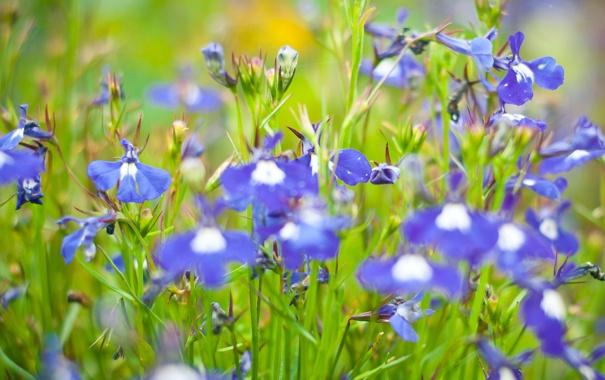 Фото обои зелень, цветы, небесные