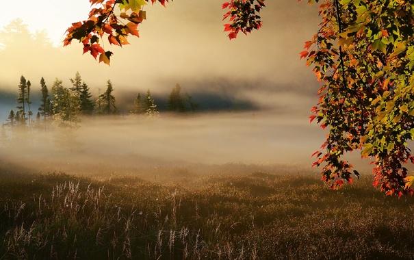 Фото обои поле, осень, туман