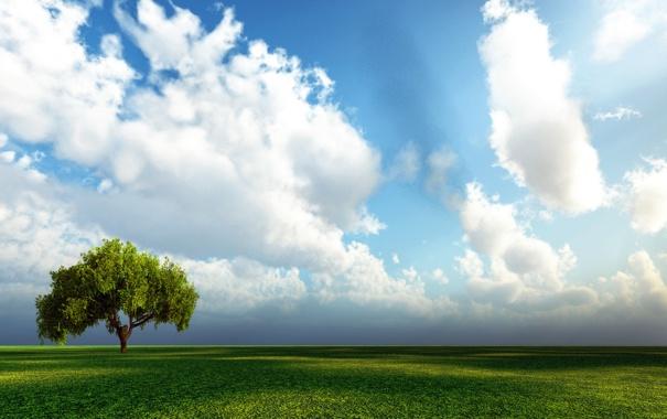 Фото обои небо, дерево, Поле