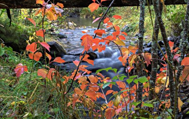 Фото обои осень, листья, река, ручей
