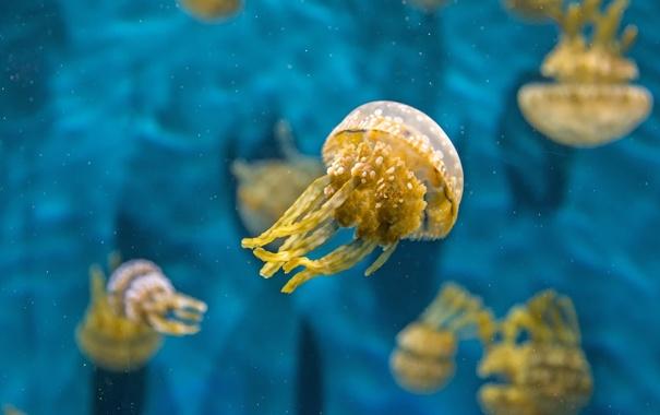 Фото обои вода, макро, медуза, подводный мир