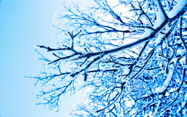 Фото обои зима, снег, ветки, природа