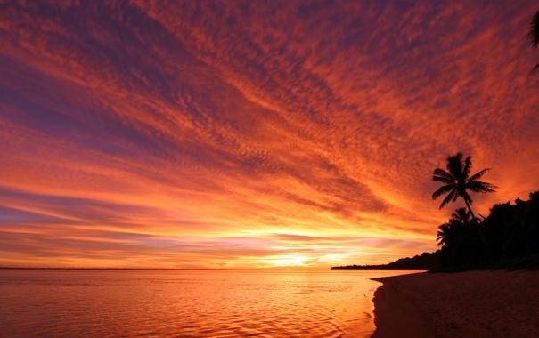Фото обои море, небо, закат, пальма, берег