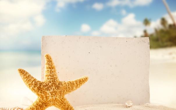 Фото обои песок, море, пляж, тропики, ракушки, морская звезда