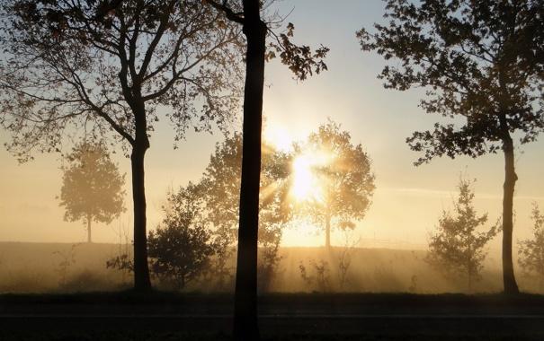 Фото обои лучи, свет, деревья, природа