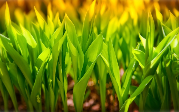 Фото обои зелень, трава, солнце, макро, свет, light, grass