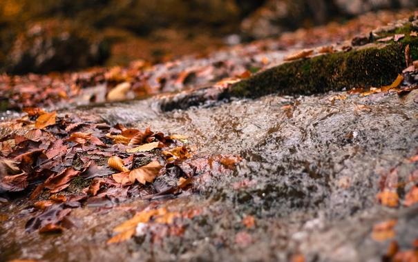 Фото обои листья, река, ручей, Весна, речка
