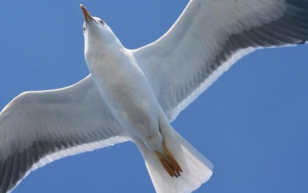 Фото обои море, белое, чайка
